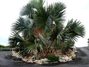 Welcome Palmtree